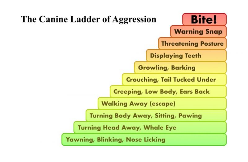 Canine Ladder of Agression