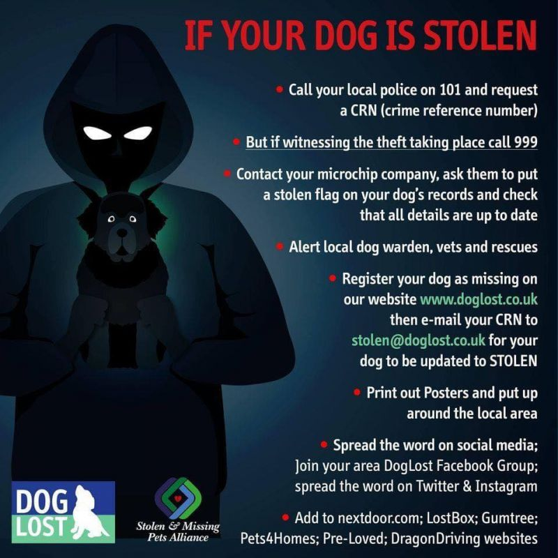 What to do if your dog is lost or stolen