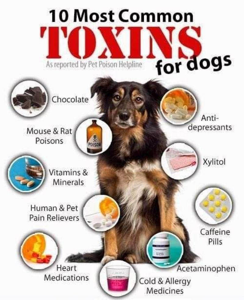 Toxins for Dogs