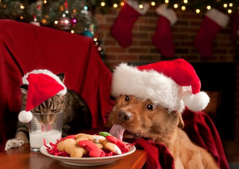 Harmful foods for animals at Christmas